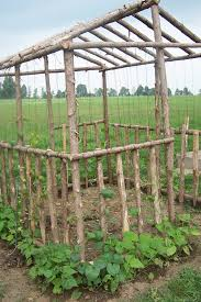 Trellis Poles Bean House Just Walk Right In And Pick U0027em U003c Maybe Just The