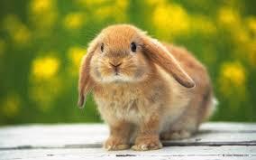 killing the rabbit u201d sierra zel chandler presents