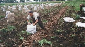 uatre nueva escala salarial para los trabajadores agrarios argentina aumento a trabajadores rurales del 35 argenpapa