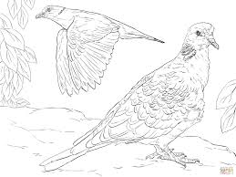 coloring page turtle turtle doves coloring page free printable coloring pages