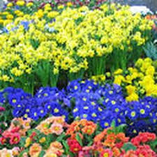 bulk flowers toronto bulk flowers 20 photos florists 60 doncaster ave