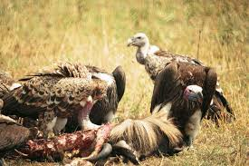 Seeking Vulture Vultures Circling Commercial Real Estate May Be A Sign