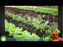 vegetable gardening for beginners some basic tips youtube