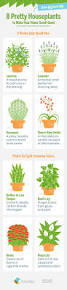 plants for the house 6865 best ideas for house plants images on pinterest apartment