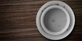 Bed Bug Interceptor 5 Best Stink Bug Traps To Help You Get Rid Of Insects Reviews Of