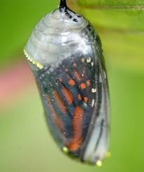cocoon and the butterfly moral for