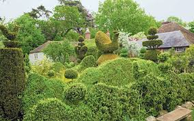 Yew Topiary - topiary it u0027s the shape of things to come telegraph