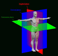 Human Anatomy Planes Of The Body Pictures Of The Inside Of The Human Body Human Anatomy Diagram