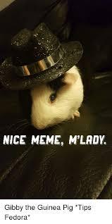 M Lady Meme - nice meme mlady gibby the guinea pig tips fedora fedora meme on