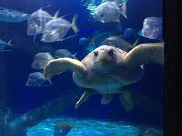 aquarium virginia aquarium vaaquarium twitter