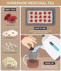growing medicinal herbs and plants at home fix com