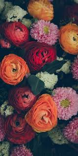 best 25 flower images ideas on pinterest flower images free