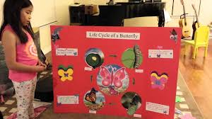 science project life cycle of a butterfly youtube