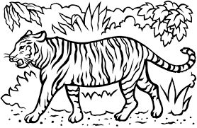 white tiger coloring pages coloring pages