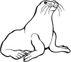 coloring page for walrus walrus coloring pages walrus coloring sheet preschool kids love