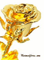 Rose Dipped In Gold Natural Flora Romantic Gift Ideas Unique Valentine Gifts Gold