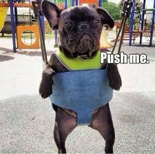 French Bulldog Meme - 284 best english french bulldogs images on pinterest french