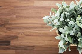 Wooden Desk Background Wooden Desk Background With Plant High Quality Walls