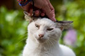 does petting really stress out your cat