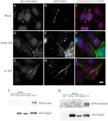 a novel gtp binding protein u2013adaptor protein complex responsible