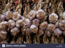 garlic cloves hanging to dry in the old town of nice cote d azure