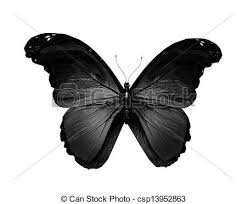 black butterfly flying isolated on white stock illustration
