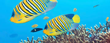 c350 marine zoology bsc undergraduate newcastle university