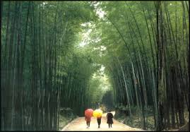 of china tree plants in china bamboo original garden plants and forests facts