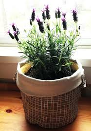 indoor trees that don t need light indoor plants that don t need sun cumberlanddems us