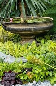 feature plants for small gardens cori u0026matt garden