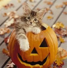 Kitten Halloween Costume 23 Adorable Cats Halloween Costumes Entertainmenttell