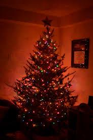 the adventures of m u0026m christmas tree hunting the sweet life