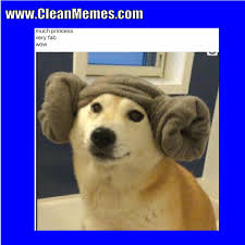 Much Dog Meme - star wars memes clean memes the best the most online page 4