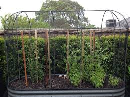 compass tanks steel flower herb and vegetable garden beds