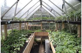 Urban Veggie Garden - modern urban vegetable gardening excellent tips for urban