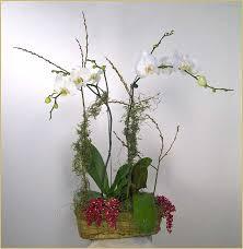 Orchid Flower Arrangements Tropical U0026 Orchid Flower Arrangements In Marin County Ca Yukikos