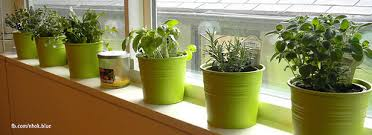 Window Sill Garden Inspiration 10 Easy Kitchen Herb Garden Ideas To Grow Culinary Herbs