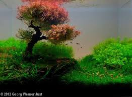 Aquascape Fish Best 25 Aquascaping Ideas On Pinterest Aquarium Aquarium Ideas