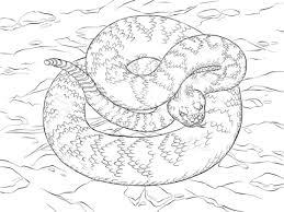eastern diamondback rattlesnake coloring page free printable
