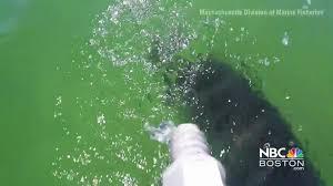 raw video cape cod shark vs gopro nbc boston