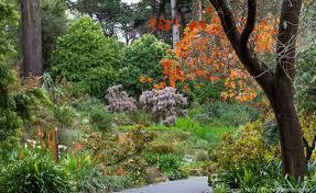 San Francisco Flower Garden by Fall Color San Francisco Botanical Garden Photobotanic