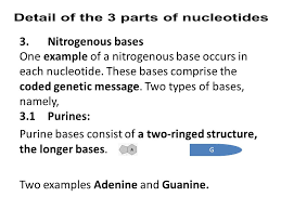 coding for life introduction nucleic acids are very special