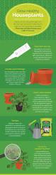 indoor gardening for mindfulness carki club