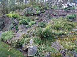 Rock Gardens On Slopes I Need A Cup Of Tea Revisiting Columbian Rock Gardens