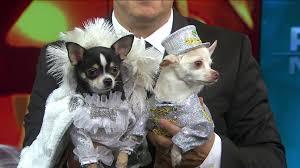 Halloween Bride Groom Costumes Dress Pets Cool Costumes Halloween
