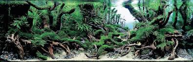 Aquascaping World Top 7 Winners Of The World U0027s Greatest Aquascaping Competition More