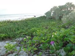 Florida State Wild Flower - top 5 florida national and state parks for camping