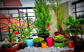 balcony garden decorated beautiful flowers home design with ideas