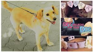 Pug Home Decor Easy Diy For Your Dog Pet Decor Accessory Youtube