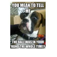boxer dog jokes 45 funny dog memes dogtime
